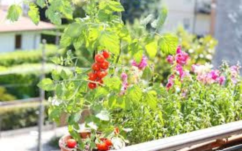 Jeu concours – Fleurissons nos jardinières